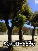 保育園 体操教室 自然の木を使って遊ぶ
