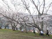 安佐北区 三田 空手教室 桜